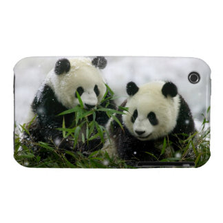 Panda Bears iPhone 3G/3GS Case-Mate Barely There iPhone 3 Cases