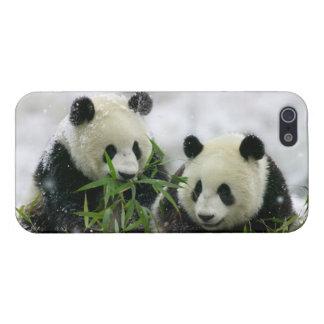 Panda Bears iPhone 5 Case Savvy Glossy Finish Case