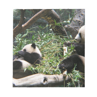 Panda Bears Notepad
