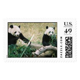 Panda Bears Postage