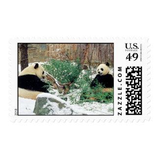 Panda Bears Postage Stamps