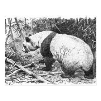 Panda Black And White Postcard