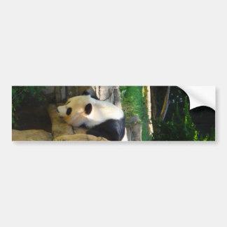 Panda caliente etiqueta de parachoque
