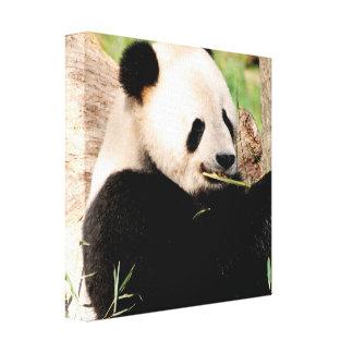 Panda china impresión de lienzo