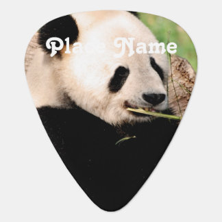 Panda china púa de guitarra