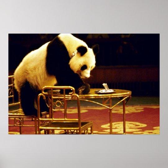 Panda, circo de Shangai, China Póster