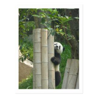 Panda climbing postcard