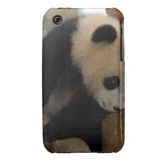 panda-cub10x10 iPhone 3 Case-Mate case