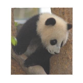 panda-cub10x10 memo note pads
