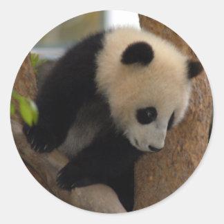 panda-cub10x10 round sticker