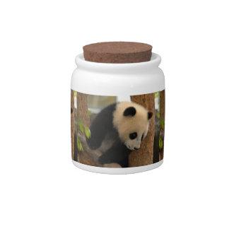 panda-cub12x9 candy jars