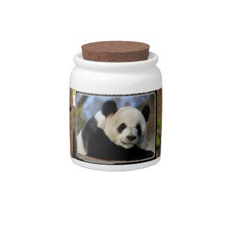 panda-cub12x9 candy dish
