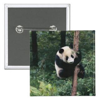 Panda cub climbing the tree, Wolong, Sichuan, Pinback Button