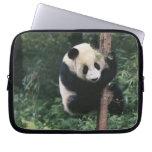 Panda cub climbing the tree, Wolong, Sichuan, Laptop Computer Sleeves