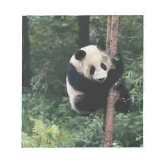 Panda cub climbing the tree, Wolong, Sichuan, Notepad