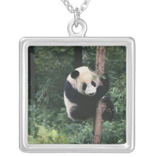 Panda cub climbing the tree, Wolong, Sichuan, Silver Plated Necklace