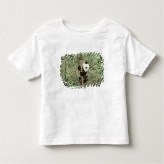 Panda cub climbing tree, Wolong, Sichuan, Shirt