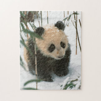 Panda cub on snow, Wolong, Sichuan, China 2 Jigsaw Puzzle