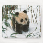 Panda cub on snow, Wolong, Sichuan, China 2 Mouse Pad