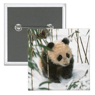 Panda cub on snow, Wolong, Sichuan, China 2 Pinback Button