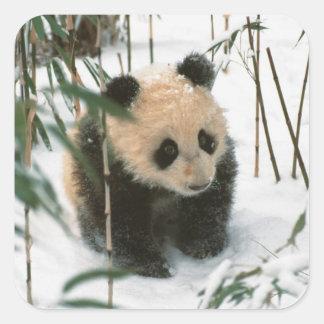 Panda cub on snow, Wolong, Sichuan, China 2 Square Sticker
