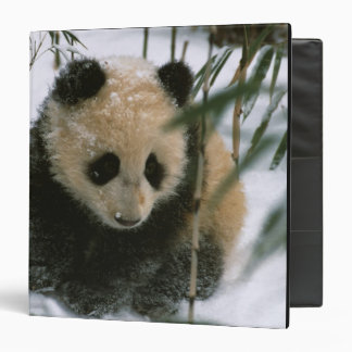 Panda cub on snow, Wolong, Sichuan, China 3 Ring Binder