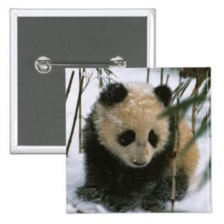 Panda cub on snow, Wolong, Sichuan, China Button