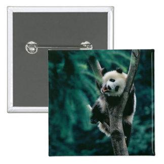 Panda cub on tree, Wolong, Sichuan, China Pinback Buttons