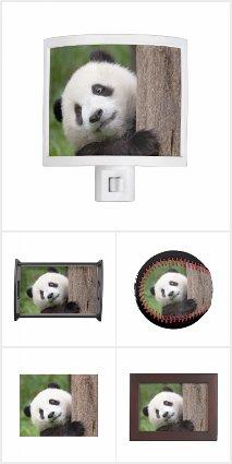 Panda Cub Painting