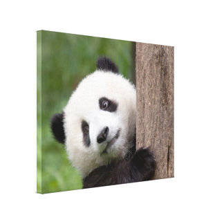 Panda cub Painting canvas painting