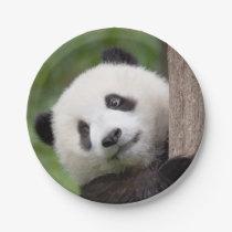 Panda cub painting paper plate