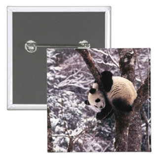 Panda cub playing on tree covered with snow, pinback buttons