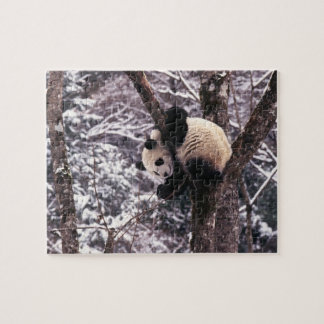Panda cub playing on tree covered with snow, jigsaw puzzle
