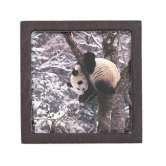 Panda cub playing on tree covered with snow, keepsake box