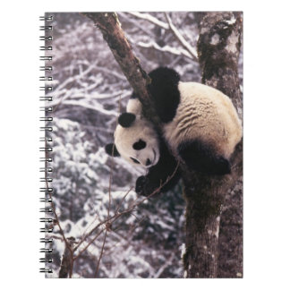 Panda cub playing on tree covered with snow, notebook