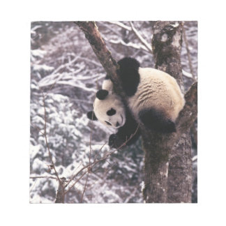 Panda cub playing on tree covered with snow, notepad