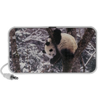 Panda cub playing on tree covered with snow, speaker