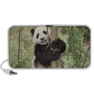 Panda cub playing on tree, Wolong, Sichuan, Portable Speaker