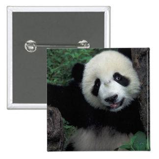 Panda cub with tree, Wolong, Sichuan Province, Pinback Button