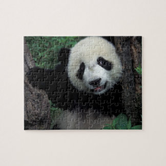 Panda cub with tree, Wolong, Sichuan Province, Jigsaw Puzzle
