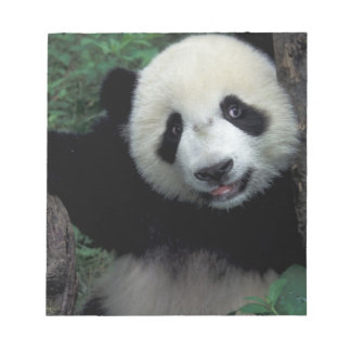 Panda cub with tree, Wolong, Sichuan Province, Notepad