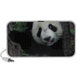 Panda cub with tree, Wolong, Sichuan Province, Portable Speaker
