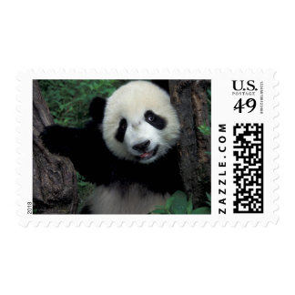 Panda cub with tree, Wolong, Sichuan Province, Postage