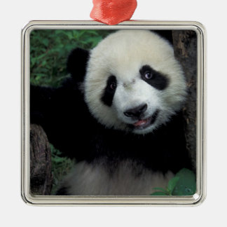 Panda cub with tree, Wolong, Sichuan Province, Square Metal Christmas Ornament
