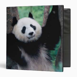 Panda cub, Wolong, Sichuan, China 3 Ring Binder