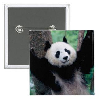 Panda cub, Wolong, Sichuan, China Pinback Buttons