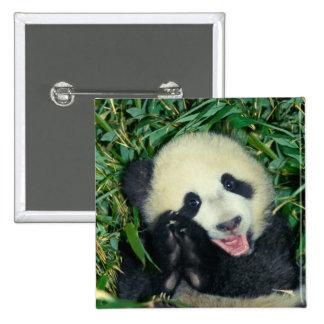 Panda cub, Wolong, Sichuan, China Pin