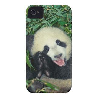 Panda cub, Wolong, Sichuan, China iPhone 4 Covers