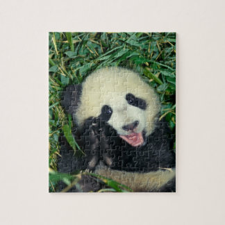 Panda cub, Wolong, Sichuan, China Jigsaw Puzzle
