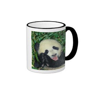 Panda cub, Wolong, Sichuan, China Ringer Coffee Mug